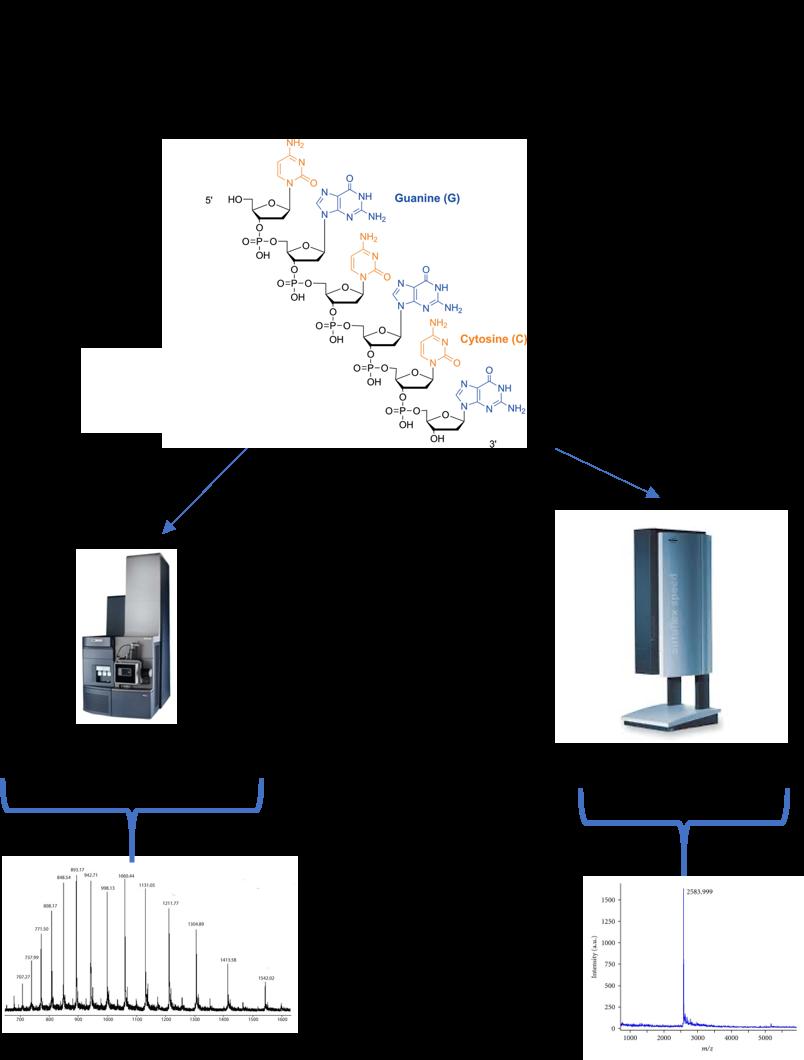 Oligonucleotide analysis workflow