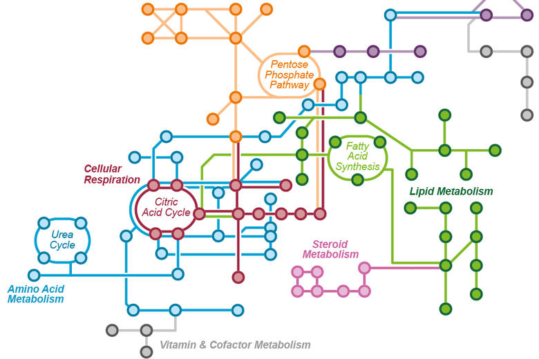 Image of metabolic pathways
